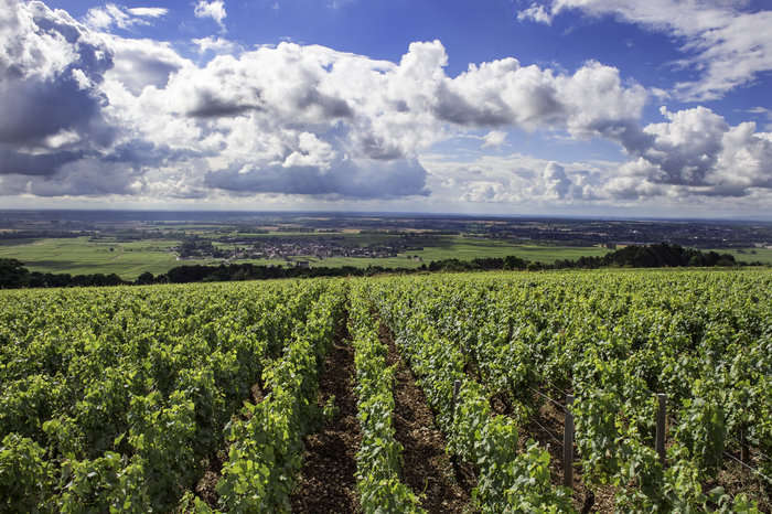 Côte de Beaune vineyard